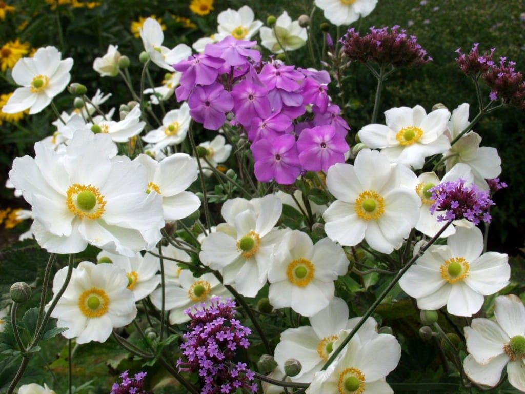 Pour faire du jardinage en automne vous devez savoir quoi for Fleurs automne