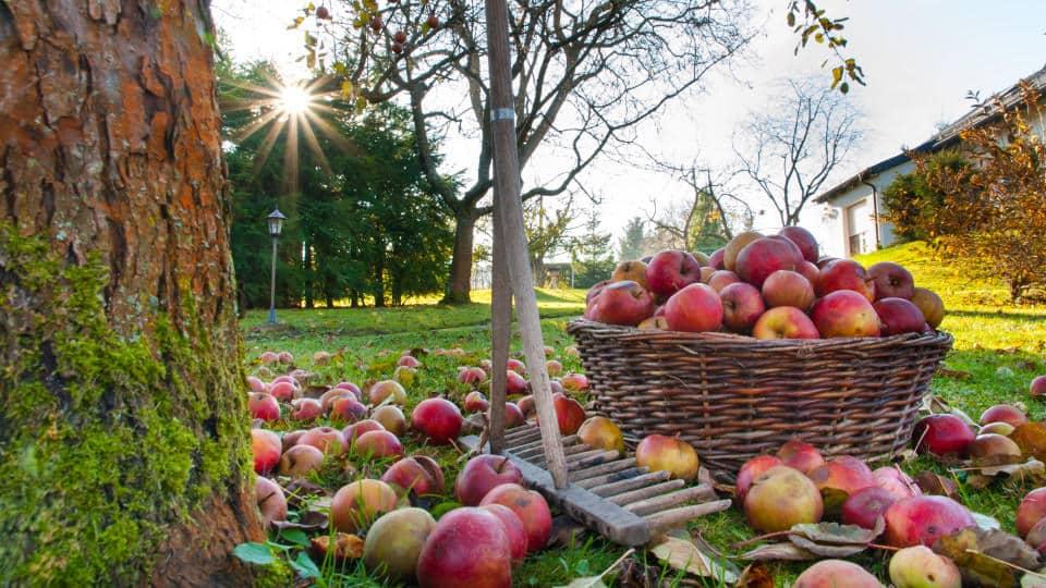 Pour faire du jardinage en automne vous devez savoir quoi planter - Quoi planter en automne ...